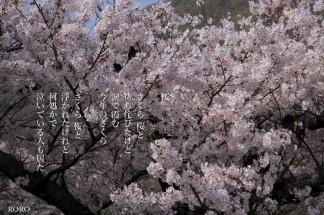 IMG_9314桜